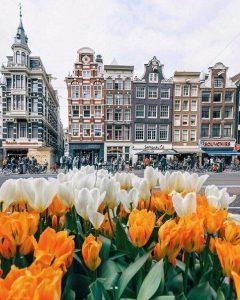 Амстердам красивое фото тюльпаны