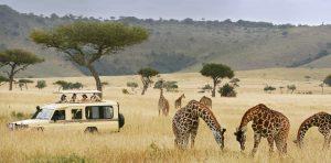 отдых на Занзибаре экскурсия
