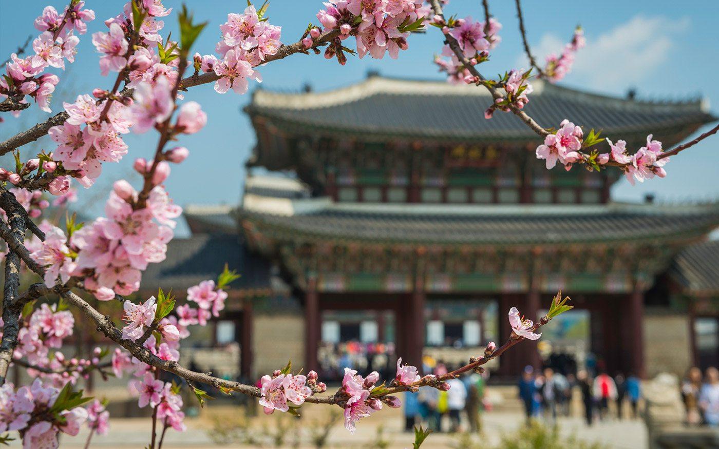 отдых в Корее в 2020 году