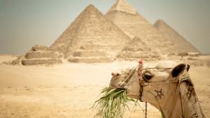 рейтинг страховок для поездки в Египет